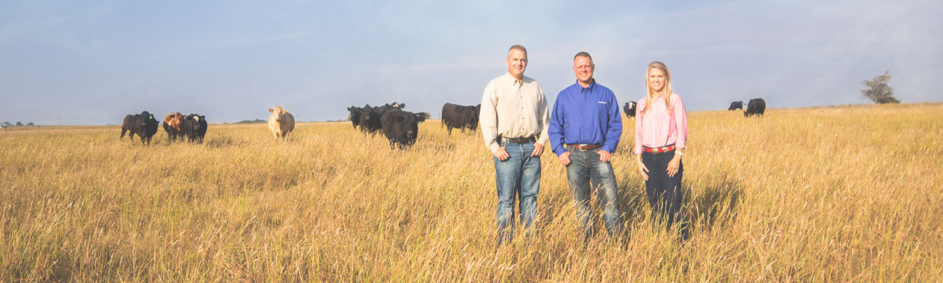 Ag Banking team members in field in front of cattle